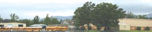 acorn-school-buses