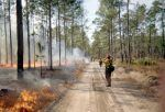 Prescribed burns begin in Ouachita and Ozark-St. Francis National Forests